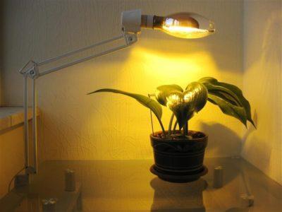 как сделать подсветку для цветов
