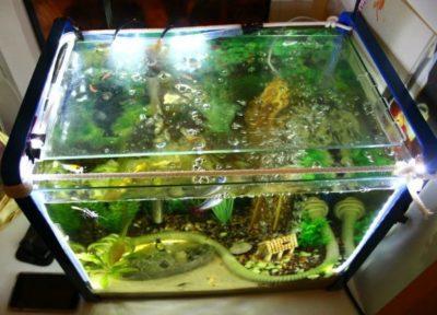 какой свет нужен для аквариума