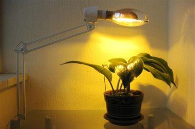что такое дежурное освещение