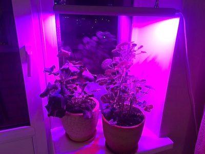 фитолампы для растений как выбрать